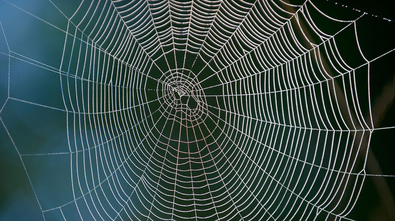 Spinne Wegsaugen