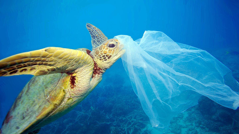 Plastikmüll im Meer - WWF Junior
