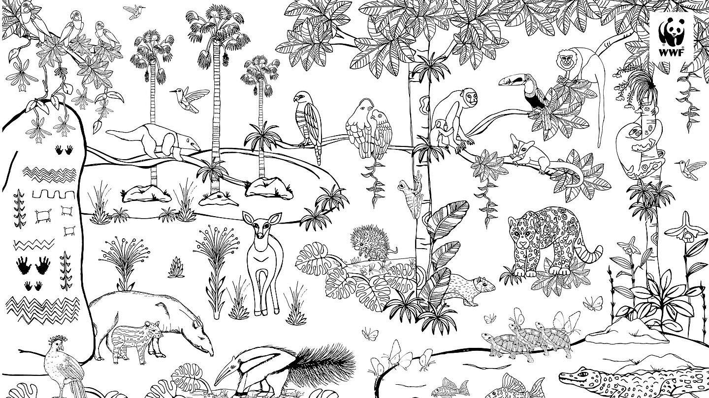 ausmalbilder natur tiere  28 images  ausmalbilder natur