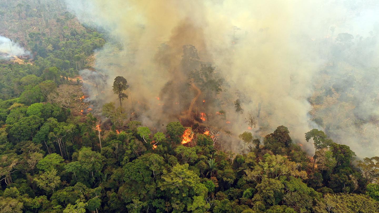 Amazonas Brennt